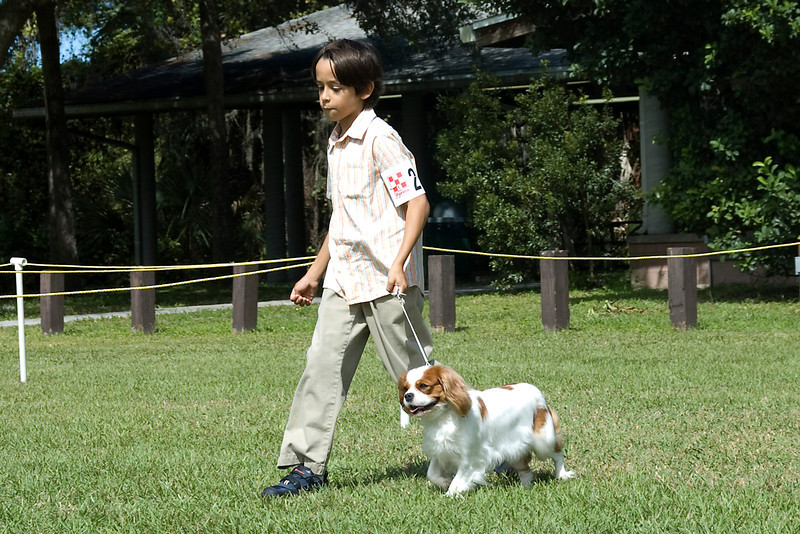 This young lad and his Cavalier King Charles Spaniel compete during the Junior Showmanship competition.