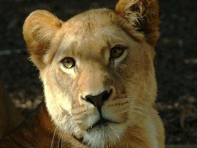 :: Taronga Zoo ::