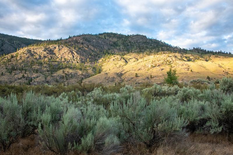 Sage>Orchard>high desert forest