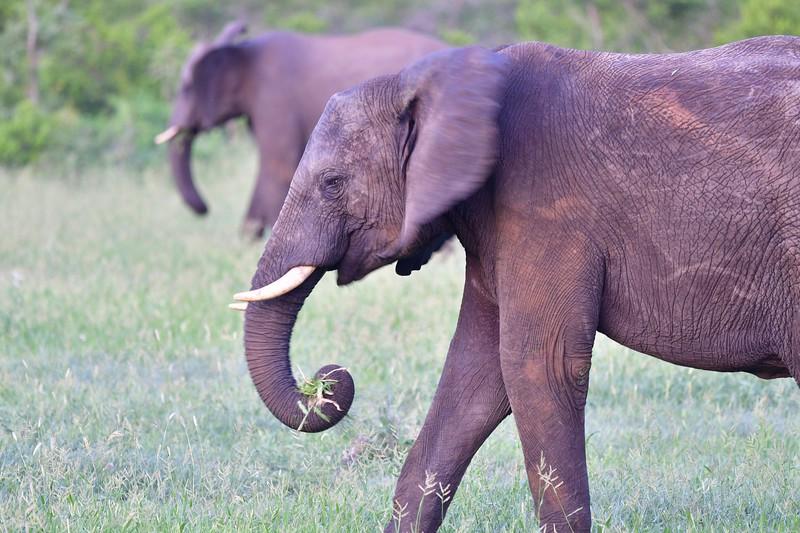 Elephant art1.jpg