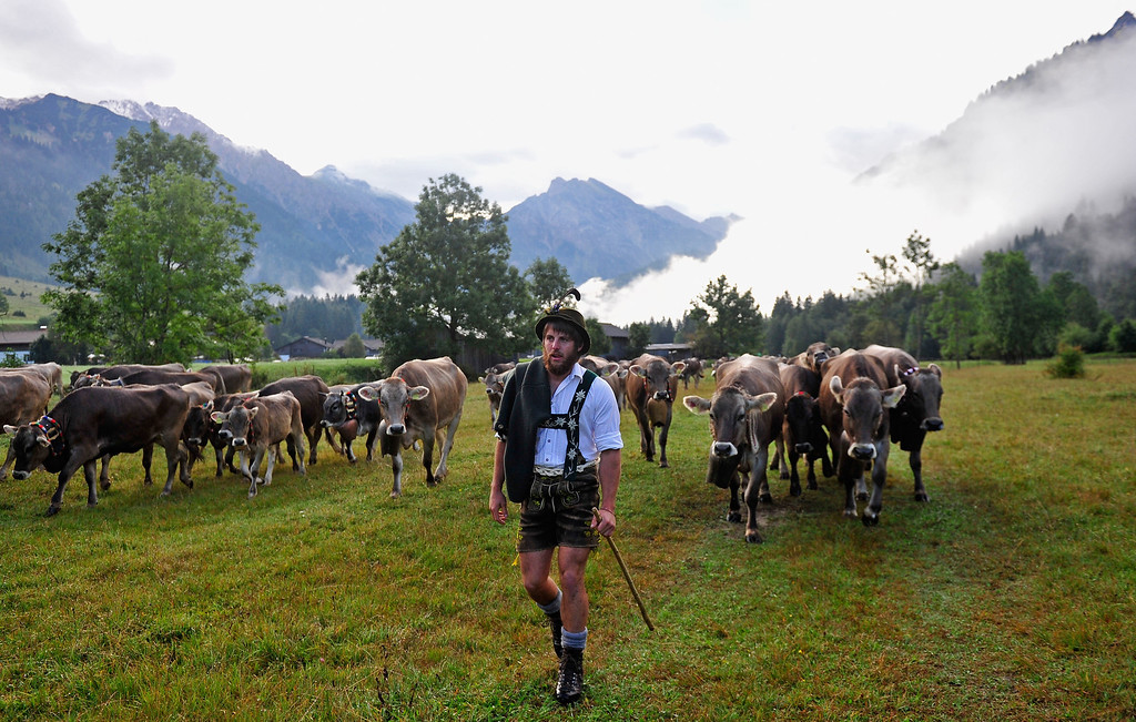 . An alpine cattle herder escort cows down into the valley during the annual Viehscheid cattle drive on September 11, 2013 near Bad Hindelang, Germany.  (Photo by Lennart Preiss/Getty Images)
