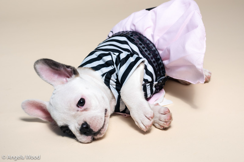 Puppies24.jpg