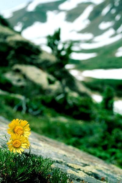 amh FLOWERS (1074).jpg