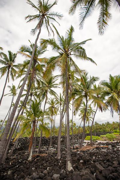 Hawaii2019-356.jpg