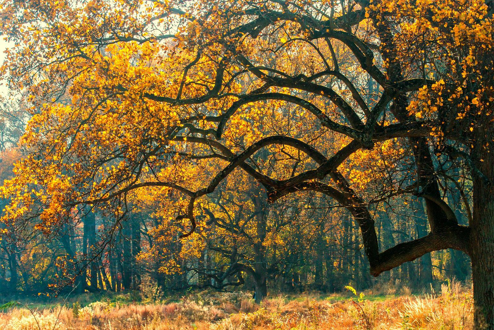 秋景秋色,瞬间的变化