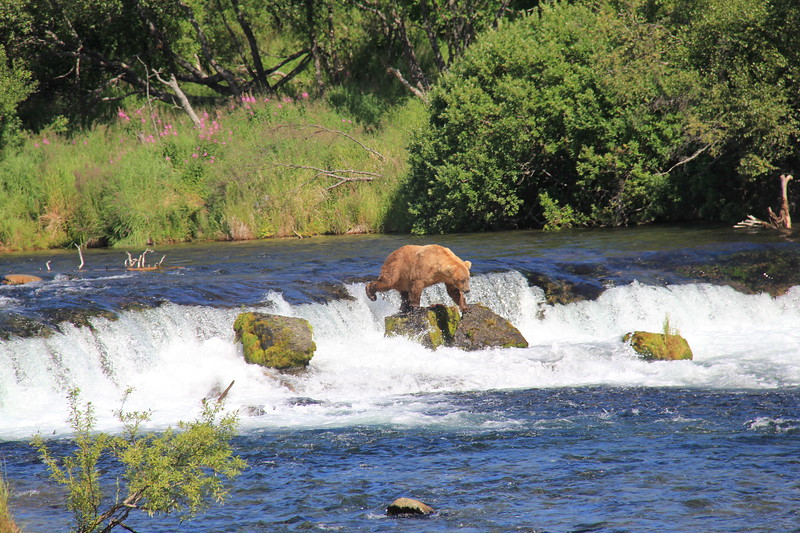 20160713-141 - Katmai NP-Brooks Camp-Another Bear at Brooks Falls.JPG