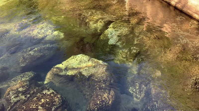 Salt Springs Ocala National Forest