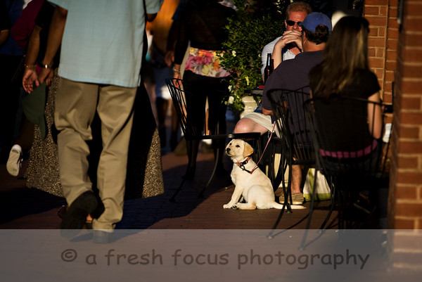 Puppy, Annapolis