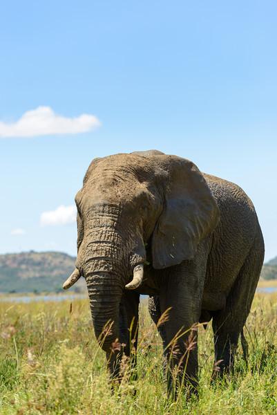 Pilanesberg-20130217-0314