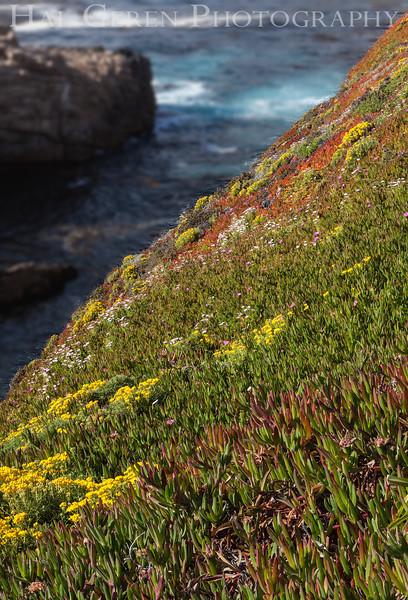 Iceplant  Garrapata Creek Headlands Big Sur, California 1206BS-F13