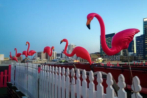 Flamingos On A Fence