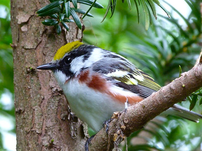 Birds April June 2013