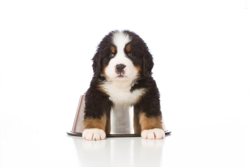 2013-Pearson Pups-Jun02-0366.jpg