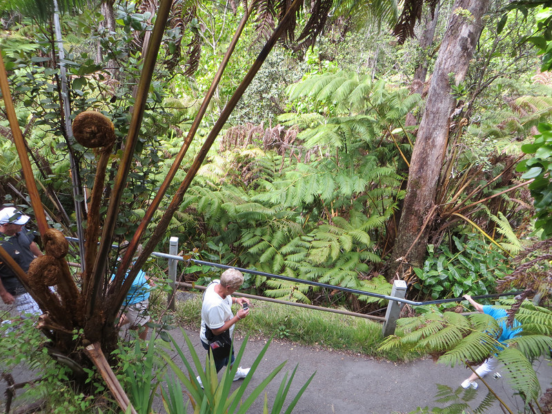 To reach the lava tube you walk downhill through a lush rainforest (note the size of the ferns).