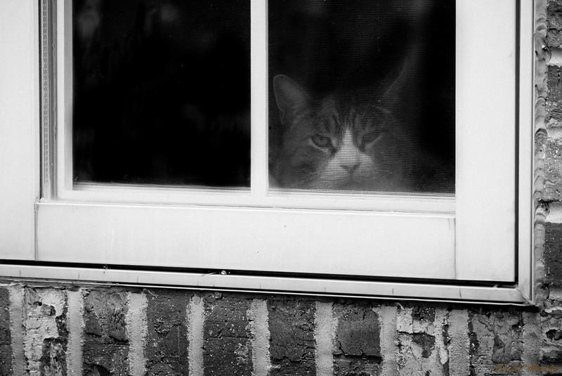 Peeping Puddy