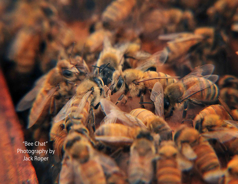 Bee Chat .jpg