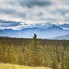 Pretty Alaskan Landscape in Denali National Park