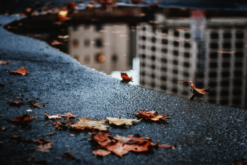 puddle reflection autumn scattered leaves 55 x 55 cm.jpg