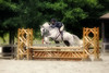 Ranson Photography not only does traditional showjumping photography, but they are willing to add some artistic flair on photos of the client's choosing.  Ranson Photography will also do pet portraits of your horses on site at the barn or where ever you wish.