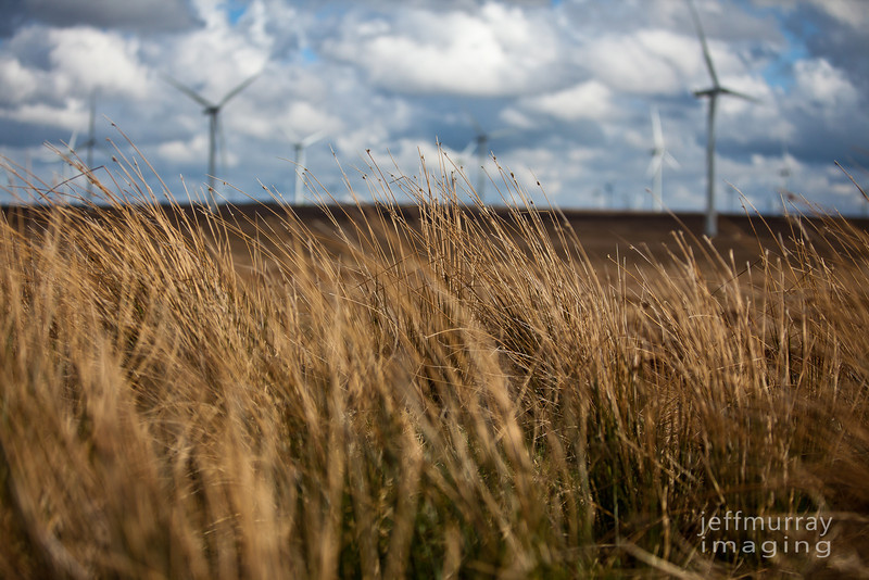 Moor grass at Whitelee.