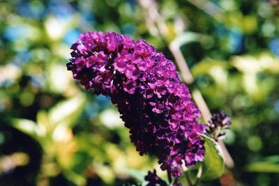 9-7-2003 Deck Flowers