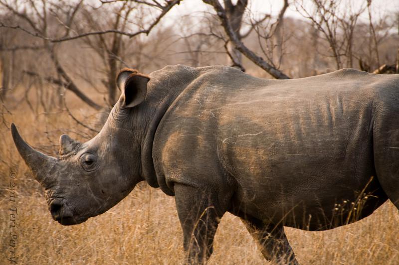 rhinoDSC_1872.jpg