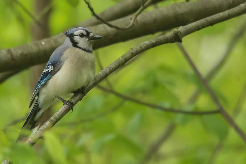 Birds 5-12-106.jpg