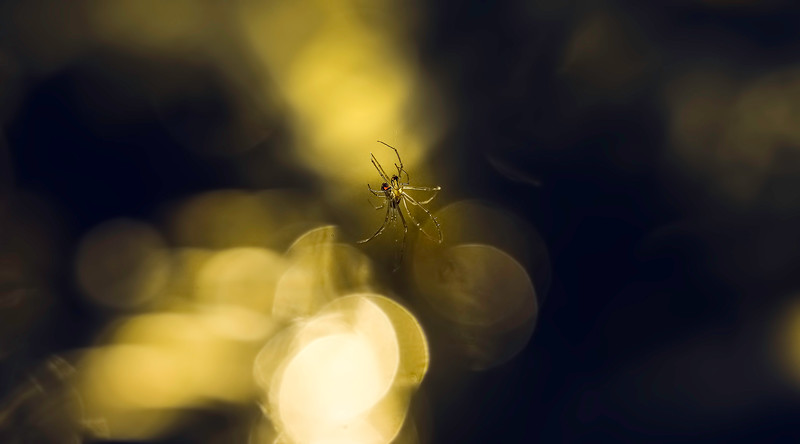 The Magic of Light-033.jpg