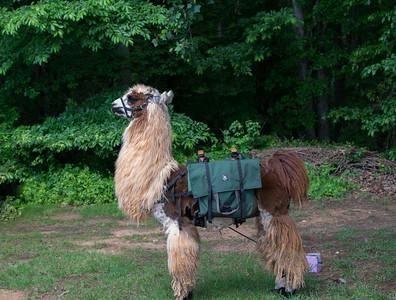 Divine Llama