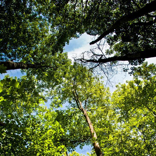 Parc naturel régional de la Haute Vallée de Chevreuse, Yvelines