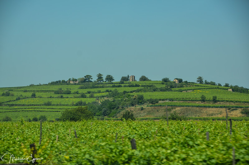 Large vineyards cover sections of land between Padova and Milano