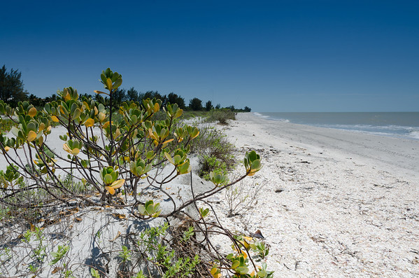 Springbreak Florida 2014