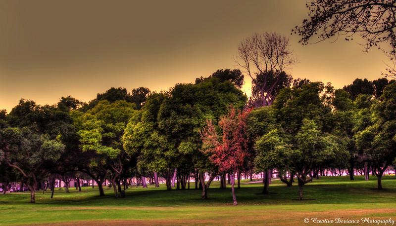 November 19, 2009
