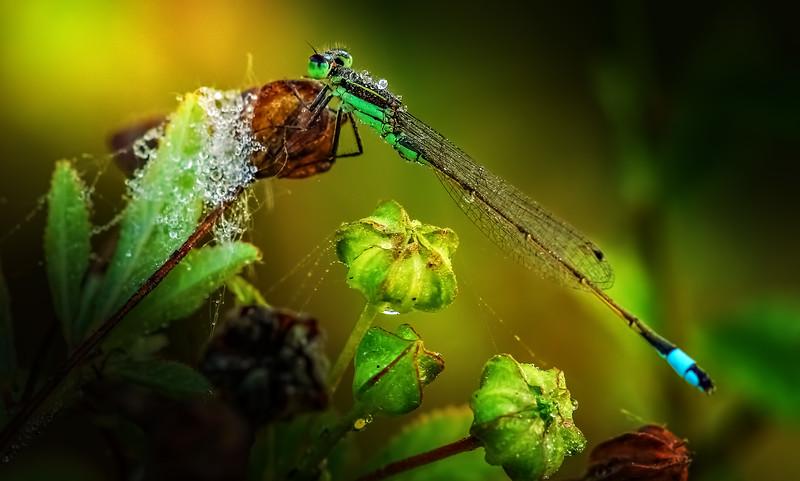 Ugly Bugs&Beautiful Beetles-201.jpg