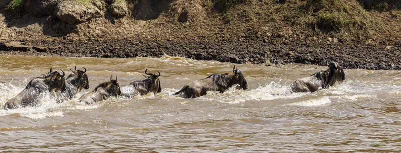 Kenya 2015-03866.jpg