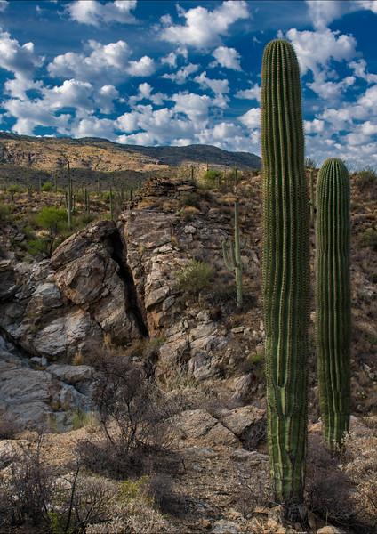 Arizona_060617_0498.jpg