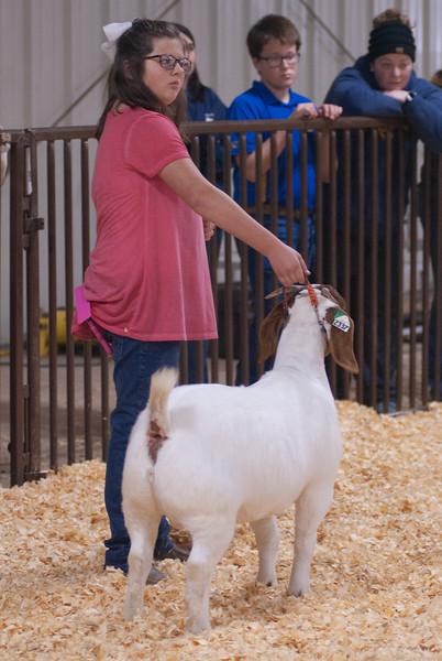 kay_county_showdown_goats_20191207-117.jpg