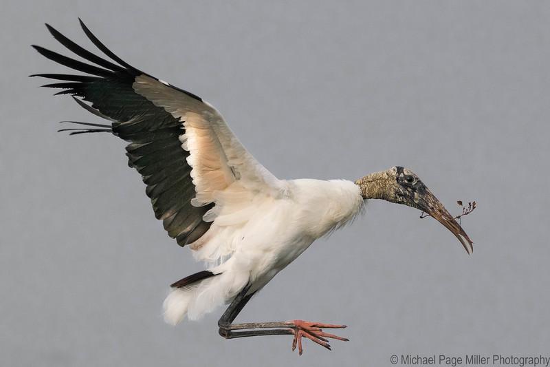 Florida Birds 25-03-16_1256.jpg