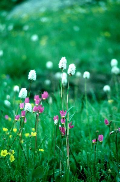 amh FLOWERS (1230).jpg