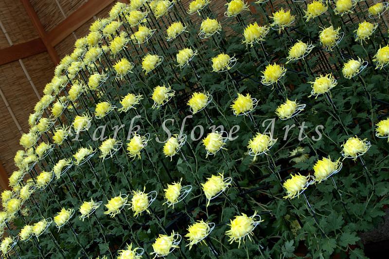 FlowersR-6572.jpg