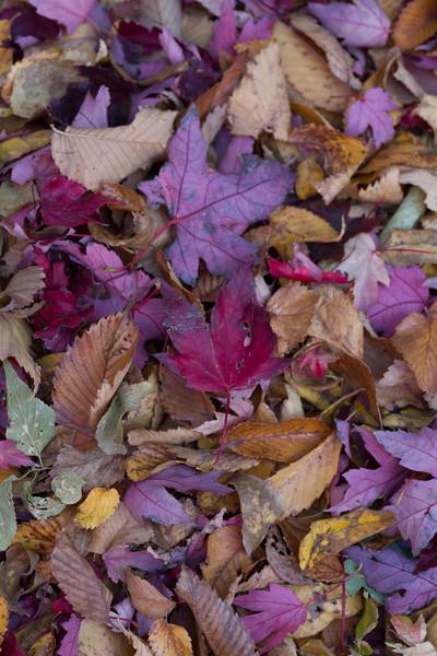 2012_10_ 20 Fall Leaves 027.jpg