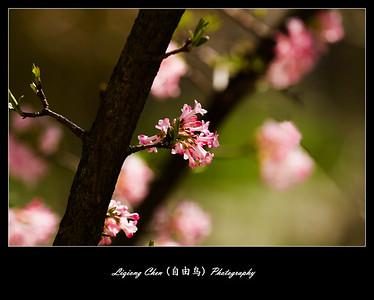 Unknown flower-21