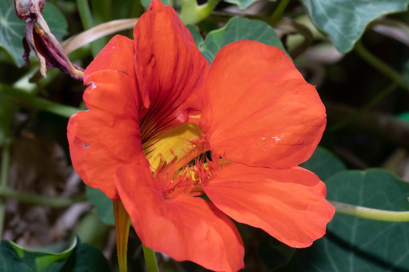 orange-9738.jpg