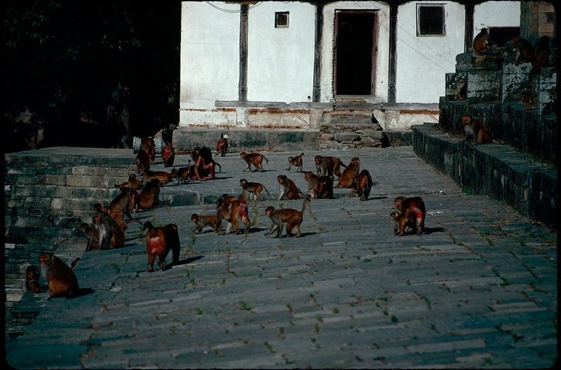 many Hanuman at a temple