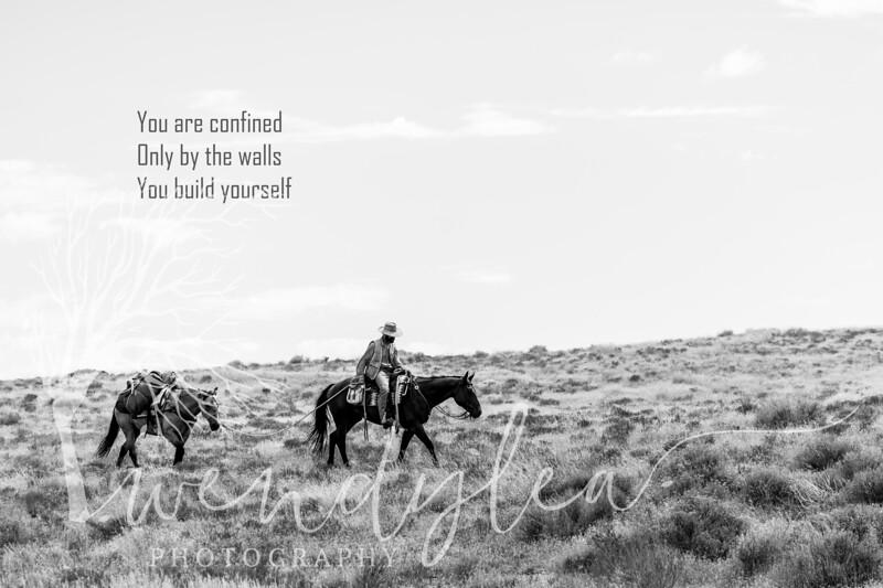 wlc  Z&B wild horses 1362019-Edit.jpg