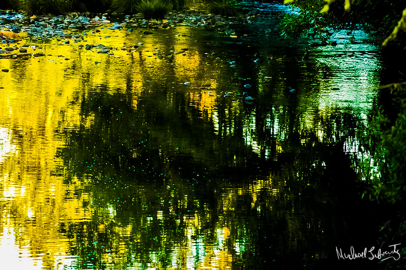 pond reflection  (1 of 1).jpg