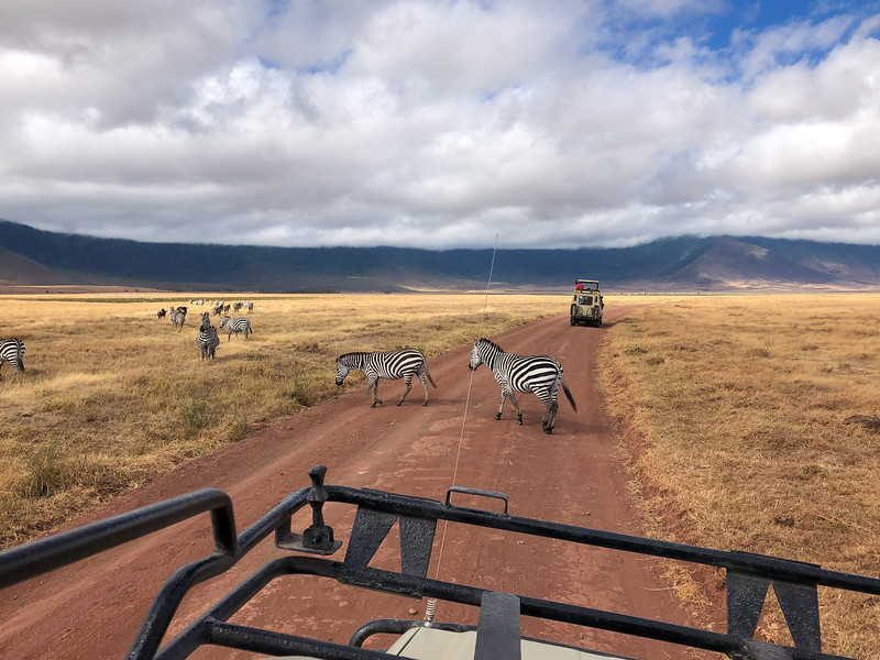 Zebra crossing in the Ngorongoro Crater