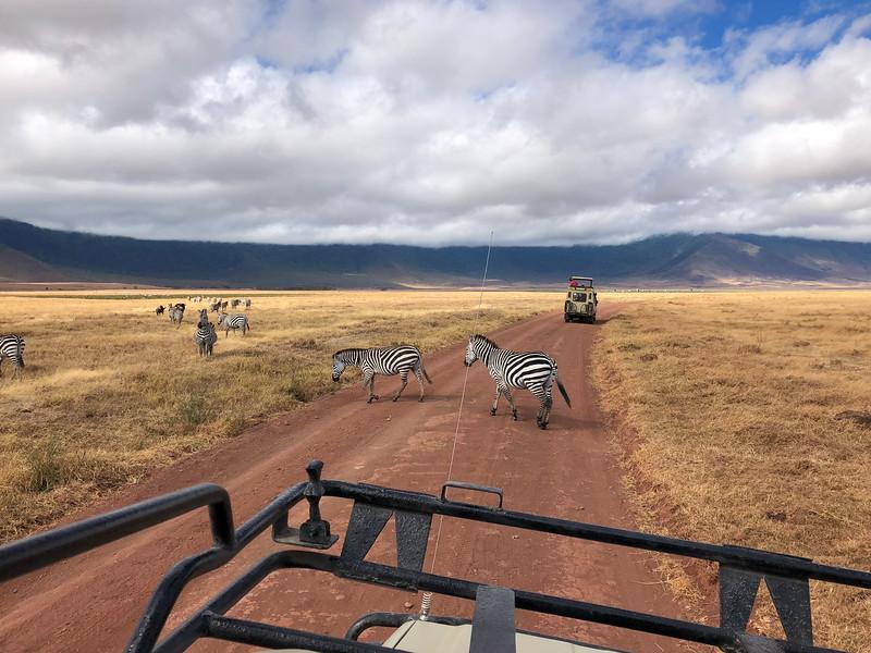 Zebra crossing in the Ngorongoro Crater