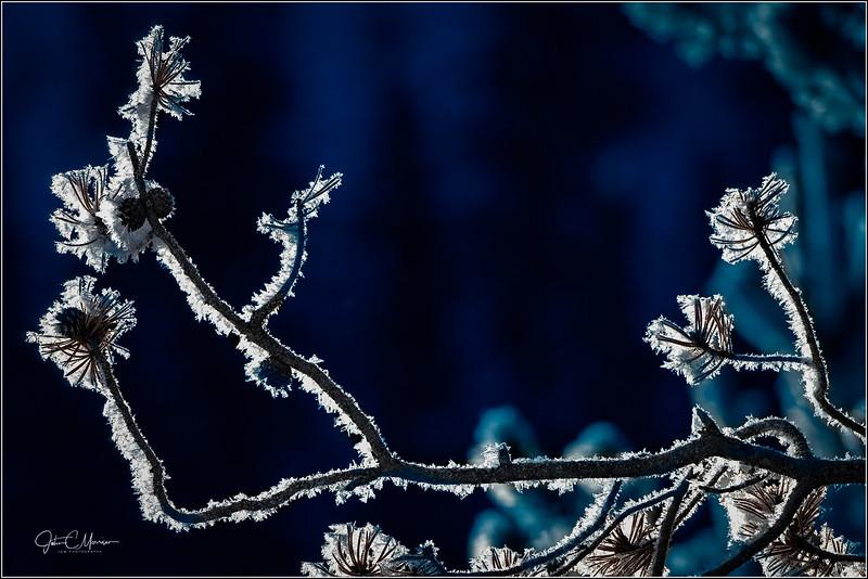 JM8_4568 Frost LPNW.jpg