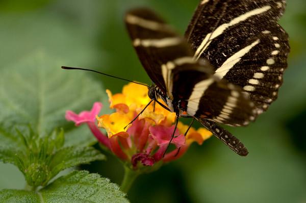 Peck Farm Butterfly Farm